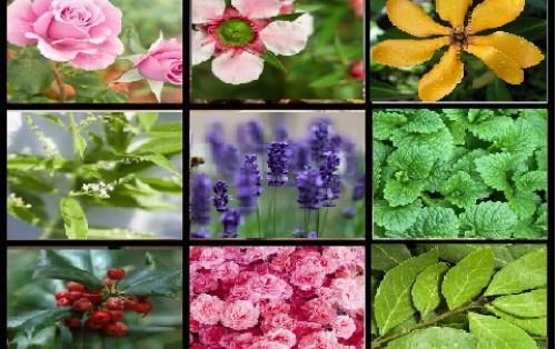 Αιθέρια Έλαια-Κερί-Αρώματα-Βάσεις σαπουνιού,χρώματα